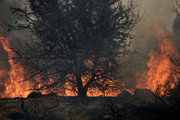 Forest fire in Metohi area of Attica, some 40 Km north of Athens, Greece, on August 14, 2017. / Φωτιά στο Μετόχι της Ανατολικής Αττικής, Δευτέρα 14 Αυγούστου 2017