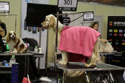 International dog festival Athens 2016  / Φεστιβάλ Κατοικίδια Εν Δράσει 2016, Σάββατο 15 Οκτωβρίου 2016