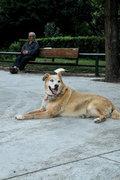 Dog, Athens, Greece, 2013 / Σκύλος, Αθήνα, 2013
