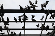 Pigeons, Kotzia Square, Athens, Greece, 2016 / Περιστέρια, πλατεία Κοτζιά, Αθήνα, 2016