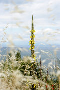 Blooming plant in the countryside, Greece, May 2010 / Ανθισμένο φυτό στην εξοχή, Ελλάδα, Μάιος 2010