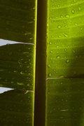 Detail of a leaf, Greece, September 2010 / Λεπτομέρεια φύλλου, Ελλάδα, Σεπτέμβριος 2010