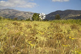 Windmill in Lasithi Plateau, Crete, Greece, August 2011 / Ανεμόμυλος, σήμα κατατεθέν του οροπέδιου Λασιθίου, Κρήτη, Αύγουστος 2011
