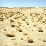 Sand dune in Agios Pavlos, Crete, Greece, August 2011 / Φυτά στην άμμο, Αγιος Παύλος, Κρήτη, Αύγουστος 2011