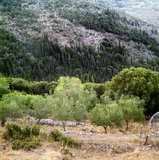 Slope with olive and cypress trees, Island of Kefalonia, Greece, August 2011 / Πλαγιά με ελιές και κυπαρίσσια, Κεφαλονιά, Αύγουστος 2011