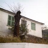 Tree trunk outside a residence in Neohori village in the Erissos area, Island of Kefalonia, Greece, August 2011 / Κορμός δέντρου έξω από κατοικία στο χωριό Νεοχώρι Ερίσσου, Κεφαλονιά, Αύγουστος 2011