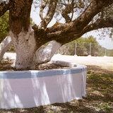Old olive tree in the frontyrad of the Monastery of Virgin Mary in Erissos, Kefalonia Island, Greece, August 2011 / Γέρικη ελιά στο προαύλιο της Ιεράς Μονής Θεοτόκου Παλαιοχέρσου, Έρισσος, Κεφαλονιά, Αύγουστος 2011