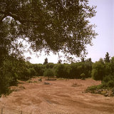 Field next to the Monastery of Virgin Mary in Erissos, Kefalonia Island, Greece, August 2011 / Αλώνι δίπλα στην Ιερά Μονή Θεοτόκου Παλαιοχέρσου, Έρισσος, Κεφαλονιά, Αύγουστος 2011