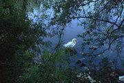 Duck in the lake of Karavomylos, Cephalonia, Ionian Islands, Greece, August 2016 / Πάπια στην λίμνη του Καραβόμυλου, Κεφαλονιά, Αύγουστος 2016