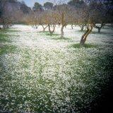 Syggros Estate, Marousi, Greece, 2003 / Κτήμα Συγγρού, Μαρούσι 2003