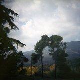 Pine trees with mountainous backdrop, Tatoi, Greece, 2008 / Πεύκα με φόντο το βουνό, Τατόι 2008