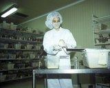 Scientist at the chemistry lab of Hellenic Pasteur Institute in Athens, Greece, November 2002 / Ερευνήτρια στο Ινστιτούτο Παστέρ, Νοέμβριος 2002