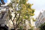 Tree outside Kapnikarea church, central Athens, Greece, February 2017 / Δέντρο στην Καπνικαρέα, Αθήνα, Φεβρουάριος 2017