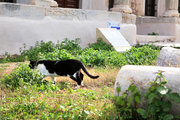 Cat wandering among ancient ruins, at Plaka old area, located under Acropolis hill , Athens, Greece, February 2017 / Γάτα τριγυρίζει ανάμεσα σε αρχαία ερείπια, Πλάκα, Αθήνα, Φεβρουάριος 2017