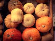 Pumpkins, Cephalonia, Ionian Islands, Greece, August 2016 / Κολοκύθες, Κεφαλονιά, Επτάνησα, Αύγουστος 2016