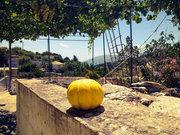 Melon in the yard, Cephalonia, Ionian Islands, Greece, August 2016 / Πεπόνι στην αυλή, Κεφαλονιά, Επτάνησα, Αύγουστος 2016