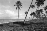 Beach in Bahia, Brazil 2005 / Παραλία στην περιοχή Bahia, Βραζιλία, 2005