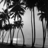 Palm trees by the sea, Ghana 2001 / Τοπίο με φοίνικες, Γκάνα, 2001