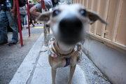 Dog. Downtown Athens, Greece, May2017 / Σκύλος. Στο εμπορικό τρίγωνο της Αθήνας, Μάιος 2017